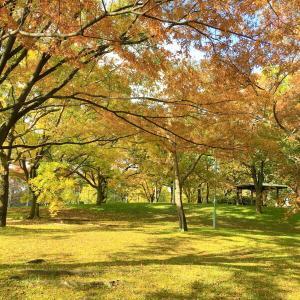 秋も深まり切りました