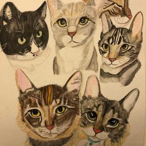 うちの猫たち6匹!