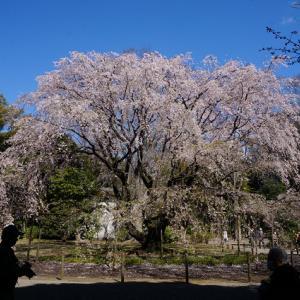 駅から歩いて2分で大自然と日本庭園ー六義園ー