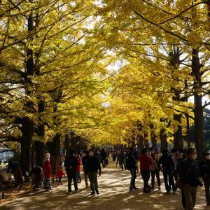 昭和記念公園と銀杏(イチョウ)