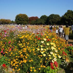 昭和記念公園 改めて感じた広大さ