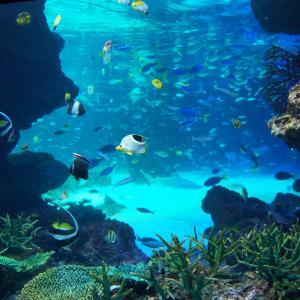 かりゆし水族館の場所は?オープン日や見どころ、料金なども!