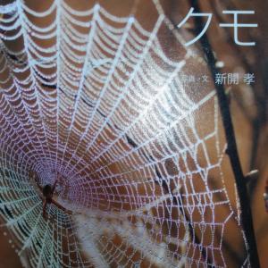 『うまれたよ!クモ』新開孝 クモは昆虫ではない