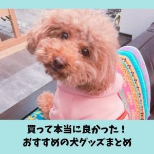 【2019年版】愛犬も飼い主も喜ぶ犬グッズ|おすすめの便利なペット用品4選