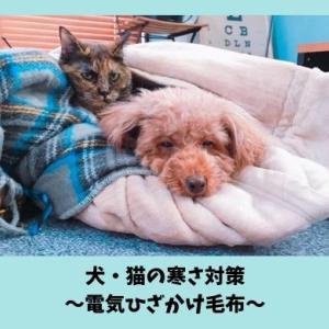 犬・猫の寒さ対策におすすめのグッズ|ペットの防寒に便利な電気ひざ掛け毛布レビュー