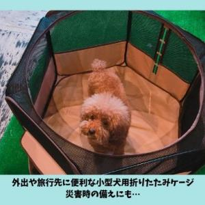 旅行や災害時におすすめ小型犬用の折りたたみケージ|リッチェルたためるペットサークルレビュー