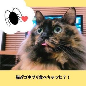 「猫のいる家にゴキブリはいない」はウソ?食べたときの病気・感染症の危険性や猫に安全なゴキブリの駆除方法