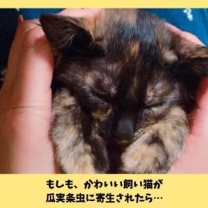 猫の瓜実条虫(うりざねじょうちゅう)|猫のお尻から米粒のような白い虫を発見!経験談と対処法