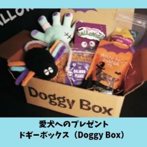 ドギーボックス(DoggyBox)はインスタで超人気!ドギボ大好き犬スタグラマー7選