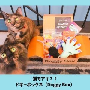 ドギーボックスは猫も楽しめる?おやつは食べても大丈夫?公式サイトに問い合わせてみた
