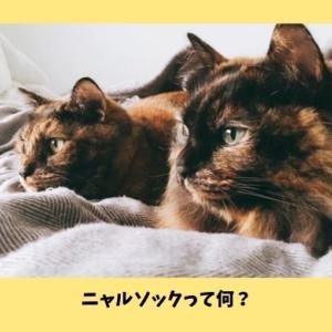 【ニャルソックって何?】自宅警備中の可愛すぎる猫画像まとめ