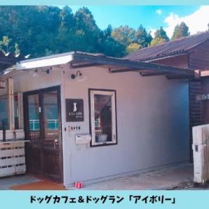 ドッグカフェ「Ivory(アイボリー)」の特徴・ドッグランでの遊び方