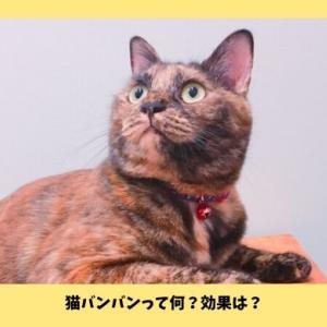猫バンバンとは?効果はあるの?猫バンバンステッカーはどこで入手できる?
