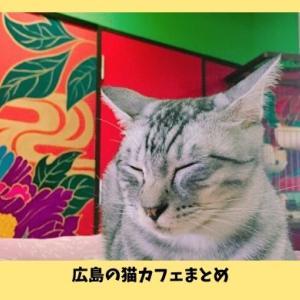 【広島の猫カフェ】広島県内の人気店8選