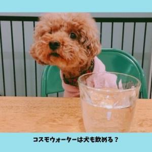 【コスモウォーターは犬も飲める】愛犬家に選ばれているウォーターサーバー