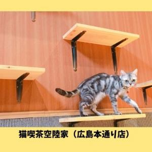 【猫喫茶空陸家|広島本通り店】ペットショップCoo&RIKU内にある小さな猫カフェ