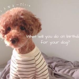 【愛犬の誕生日の祝い方】何するか迷っている人必見!アイデア7選