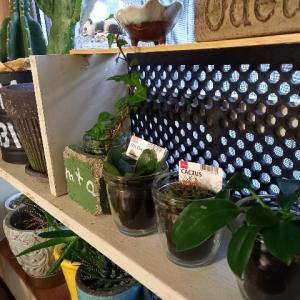 モロゾフプリン🍮のガラス容器の活用!と100円ショップの観葉植物🌵