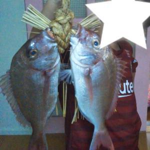 お兄ちゃん、魚を捌きたい病!!