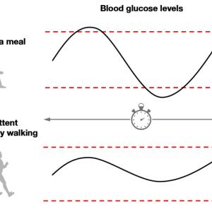 糖尿病なら絶対に夕食後に散歩せねば