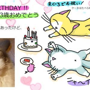 今日は愛猫・翔さんの誕生日!まだまだ稼がないとね
