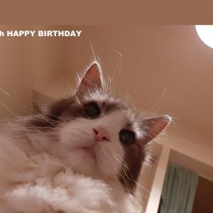 愛猫が14歳になった記念日