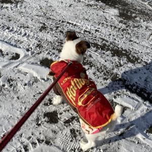 寒いぞ札幌。それでも散歩する「もずく」。初めての冬を体験
