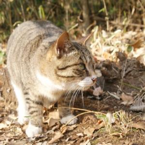 動物病院に救急で運び込まれた猫。助からず・・・・・