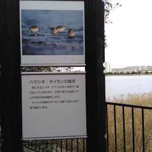谷津干潟鳥獣保護地区