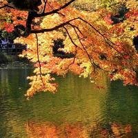 軽井沢雲場池の紅葉は見頃です