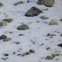 軽井沢にうっすら雪が降りました