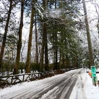 軽井沢も雪が降りました
