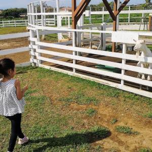 【横須賀】広大な無料アスレチック&動物とのふれあい!コロナでも安心な大型公園「ソレイユの丘」