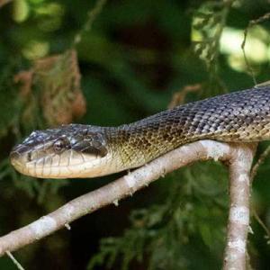 庭に蛇が現われた!幸運の使者?