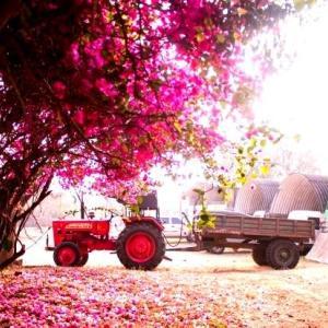 iPhone12ProMaxロック画面等のピンクの無料壁紙・待受けを配信中