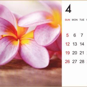 セリア~フレッシュスプリング&桜のコーナー&4月からのカレンダー編 。.:*・° ♫