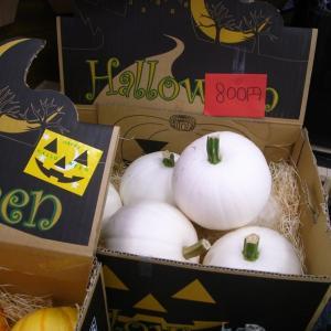花屋さんで見かけたハロウィン用の色々なかぼちゃ編 。.:*・° ♫