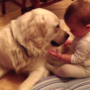 かわいいゴールデンレトリバー犬と赤ちゃん謎の会話動画特集 🥰 どっちも可愛すぎる #3