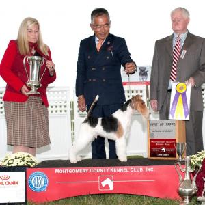 Montogomery Weekend -World Greatest Terrier Show-