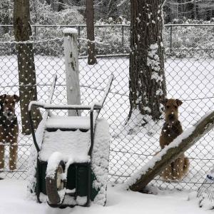 雪❄️そして毎日氷点下