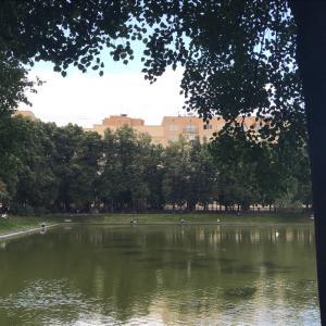 317.近くの池(8月2日)