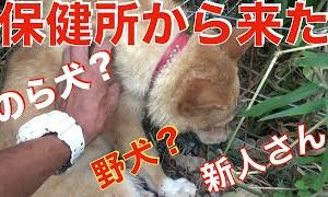 怯える犬の接し方【Animal Rescue Nursingポチパパ】