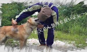 The brushing of the dog in YouTube.【犬のブラッシング】湧き出すような大量の冬毛!