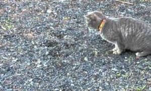 hunting of the cat in YouTube.【猫の狩り】