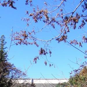 城峰公園と桜山公園の冬桜