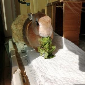 ウサギとワンちゃん