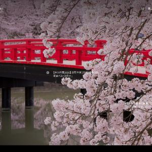✿花見もコロナ影響!平岡公園梅も見るだけ2/18に6輪目咲いた胡蝶蘭「第2世代」たち_no.18