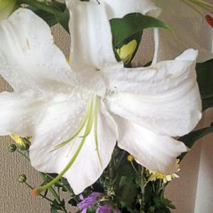 夏の仏前の花✿はカサブランカCasablanca、長持ちさんで、白い魅力に感謝~~m(_ _)m
