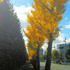 北海道事情いろいろ?!やっぱり多い75人!と初雪❆ & 銀杏並木=落葉のコラボレーションno.1