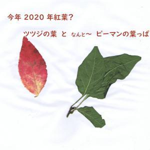 北海道コロナ/冬事情はますます~悪化へ感染が11/7(土)過去最高の187人?!(札幌市133人